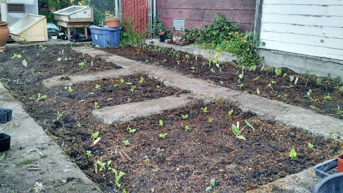 Photo: Seedlings planted directly into soil that has been amended and prepared in a Planting Justice permaculture garden