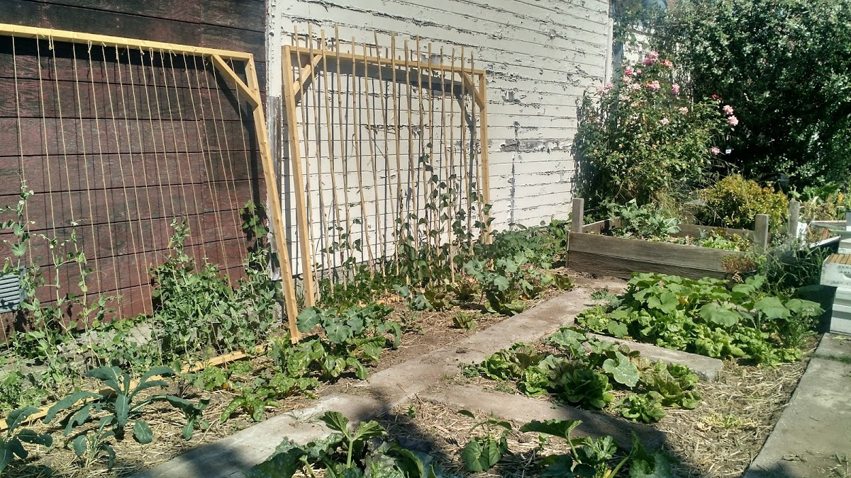 Photos: Months later, vegetables growing directly in ground in a Planting Justice permaculture garden