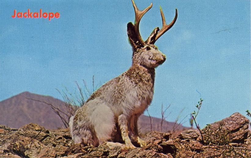 jackalope postcard.jpg