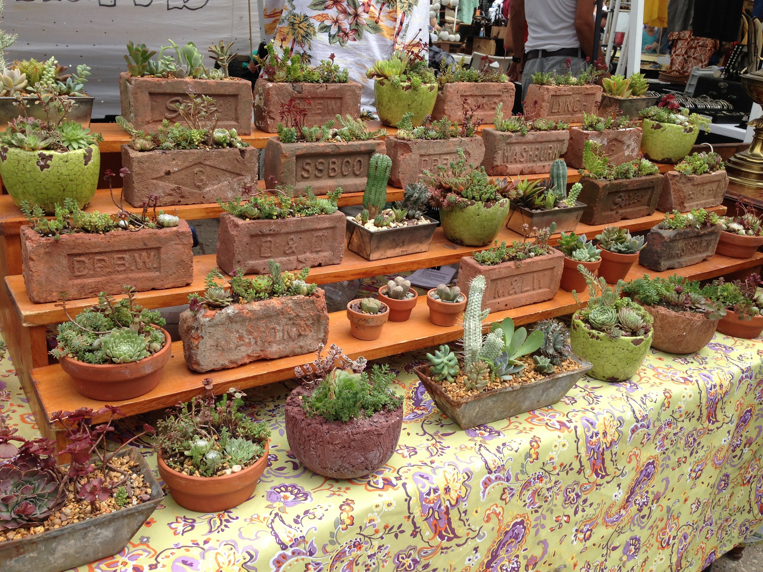 cute plants at the Flea