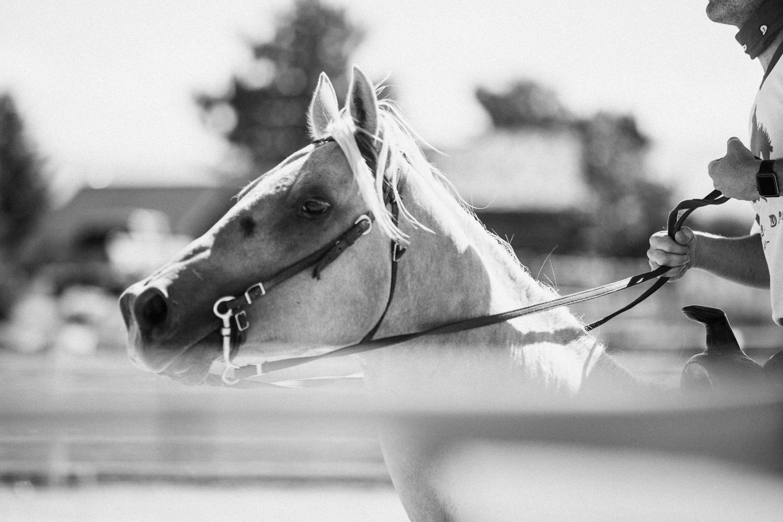 close-up-shot-of-horse-at-legacy-ranch-heber-utah