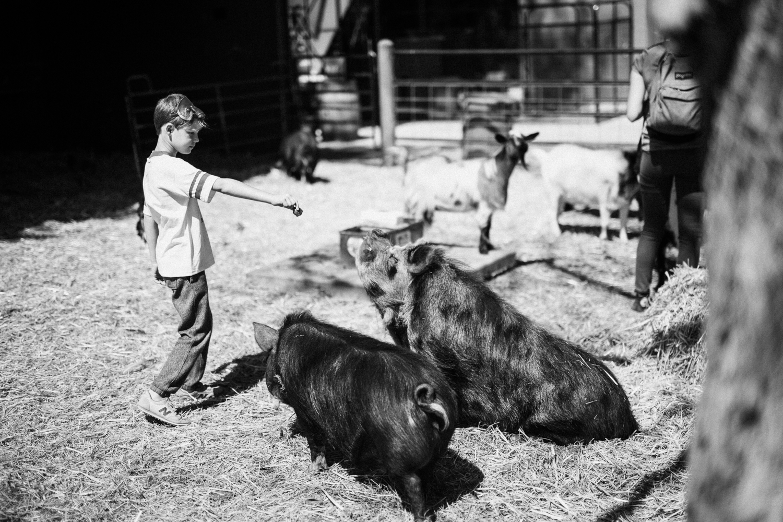 boy-feeding-sitting-pig-at-legacy-ranch-in-heber-utah