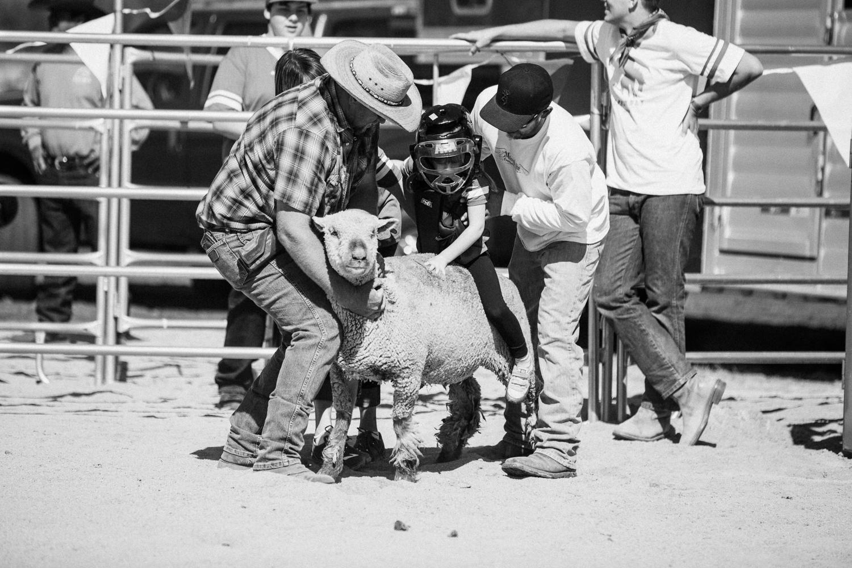 little-girl-riding-sheep-legacy-ranch-park-city-utah