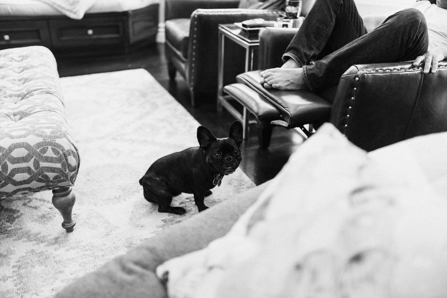 candid-and-natural-black-and-white-of-family-pug-dog-slc-utah