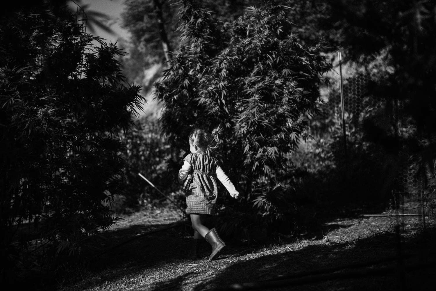 candid-black-and-white-photo-of-little-girl-running-through-weed-farm-in-benbow-california