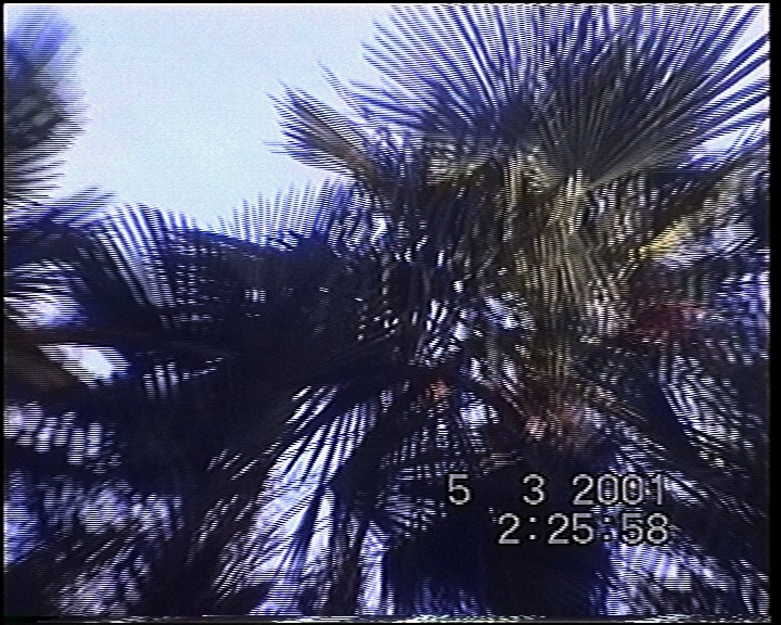 VideoGlide Snapshot_0496 2.jpg