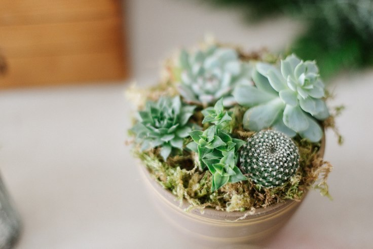 sophisticated floral designs modern christmas succulent centerpiece planter Liza James Photography (2) (736x491).jpg