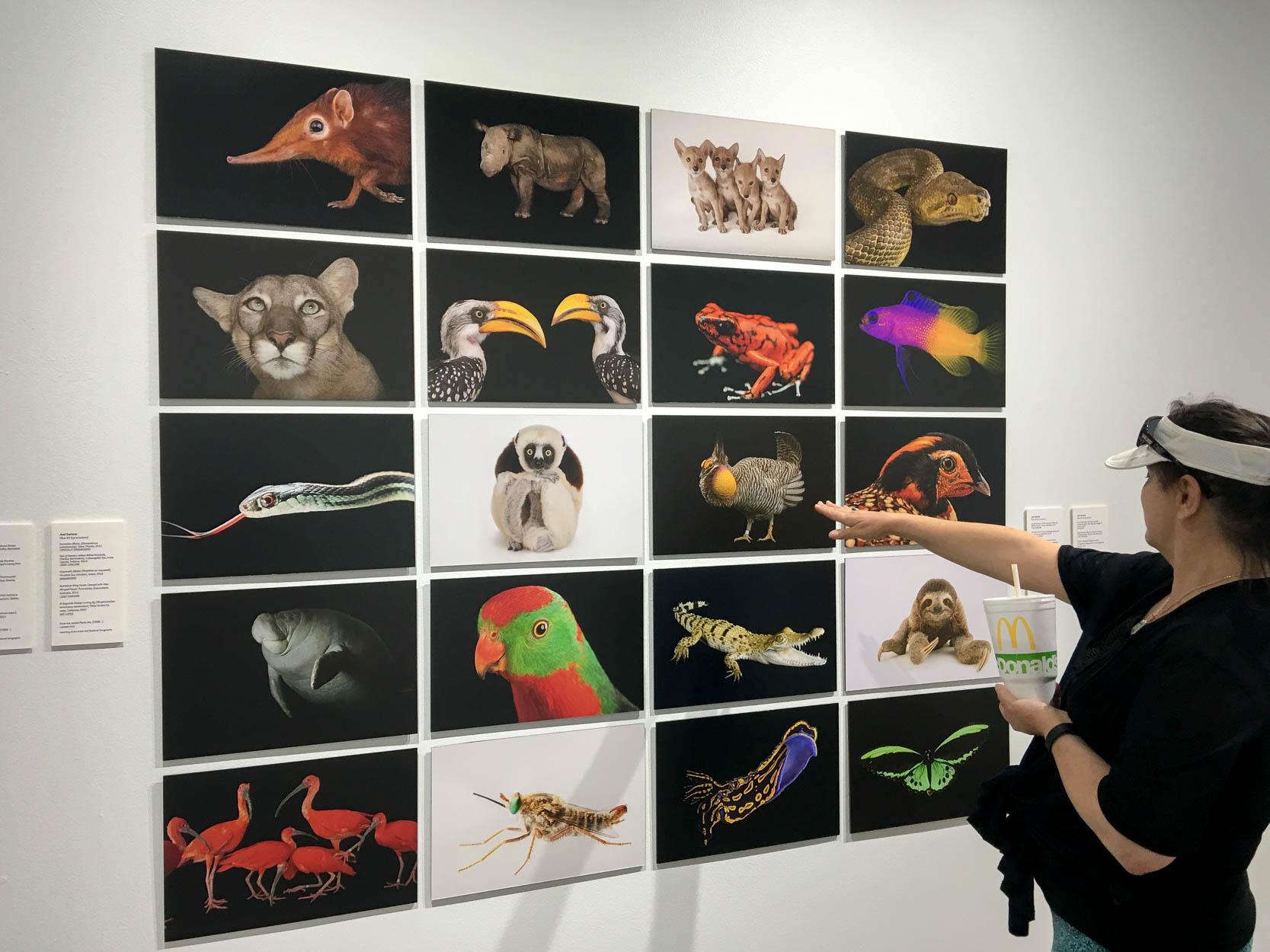 Joel Sartore's photos were exhibited at Spring Street Studios