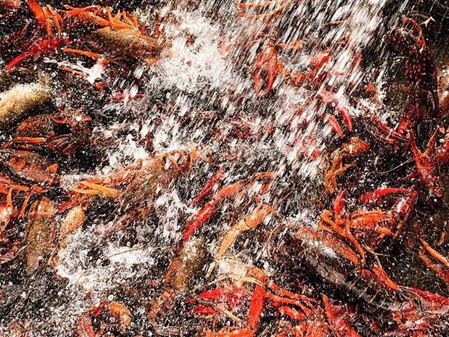 Crawfish washing before boil, Houston, Texas. #crawfish #crawfishboil #crawfishhouston #iphonexsmax #houstonphotographer