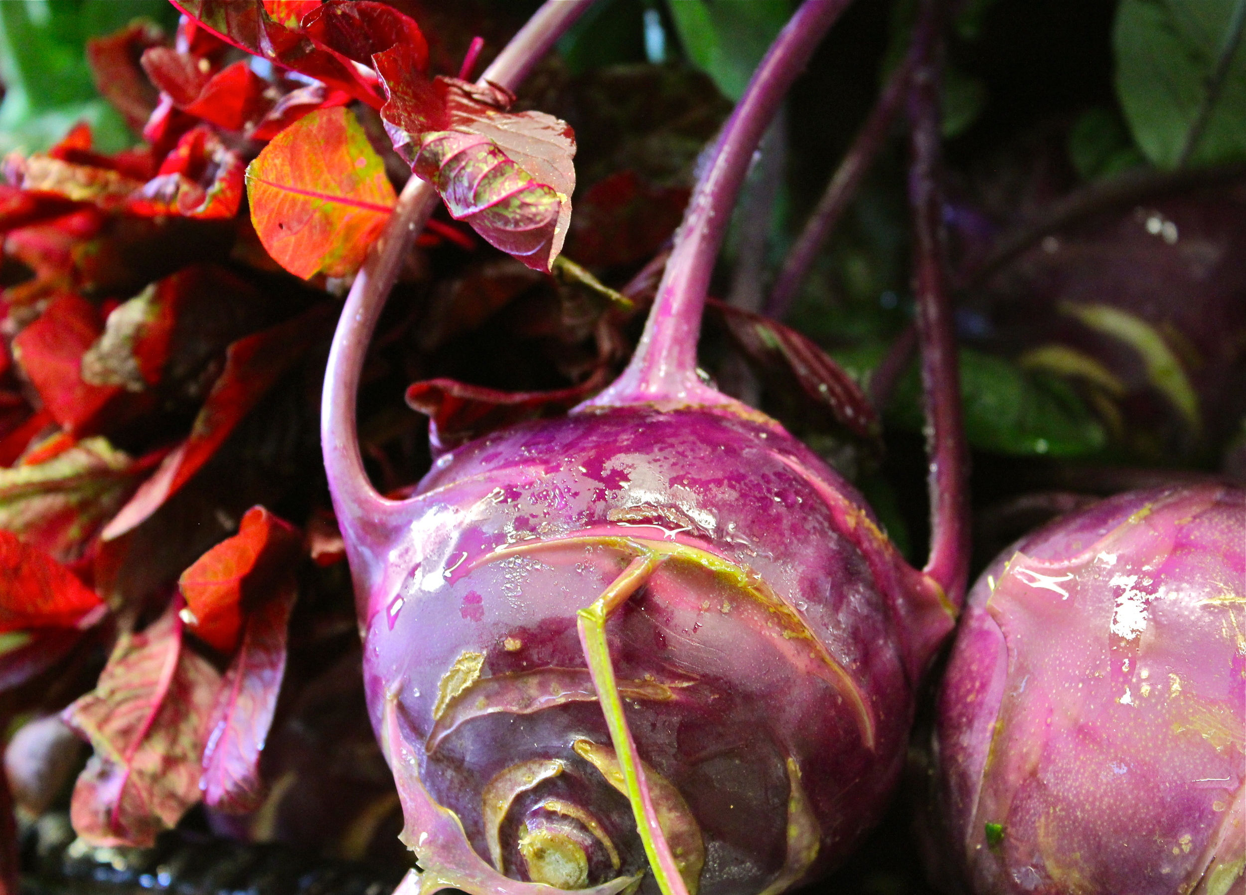 Gorgeous purple kohlrabi on the shelves at Argus.
