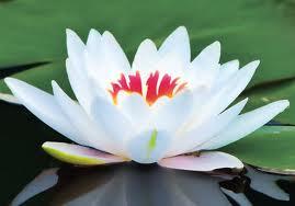 AWE_John-of-God_Abadiania_flower1.jpg