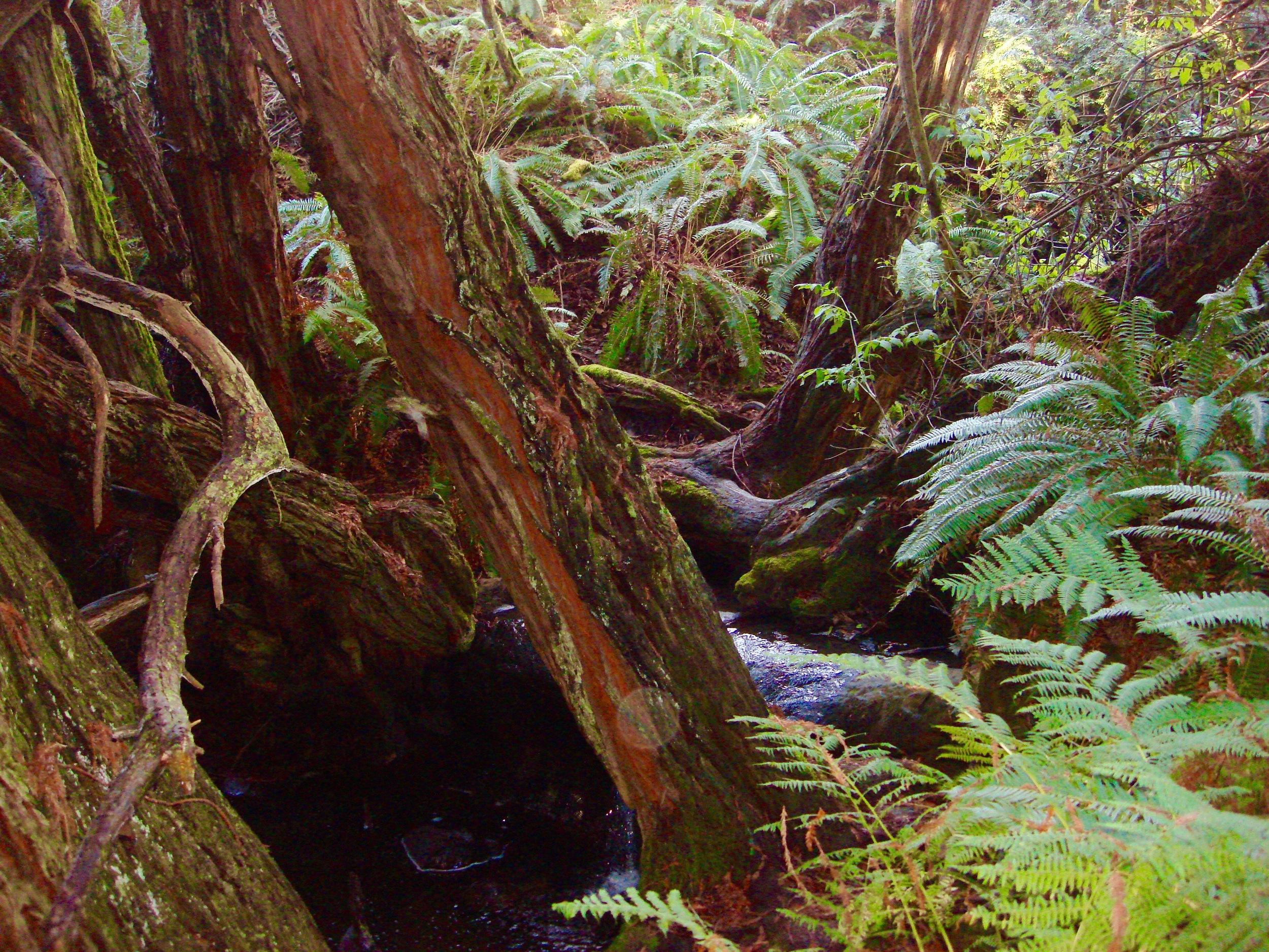Salal Trail (15 min N of Bella Vista)