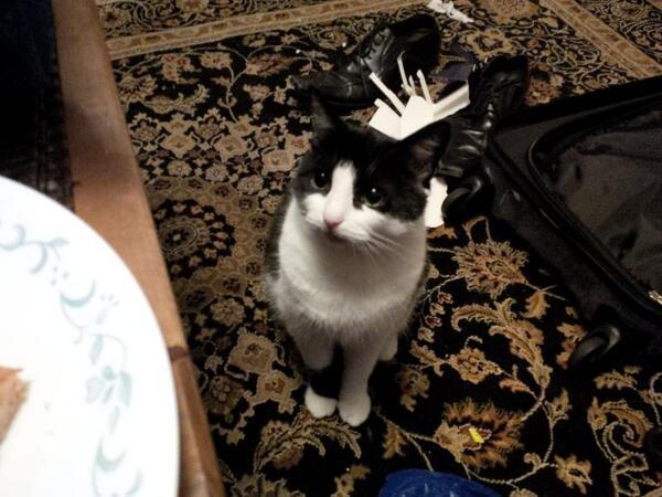 Kittie on Rug