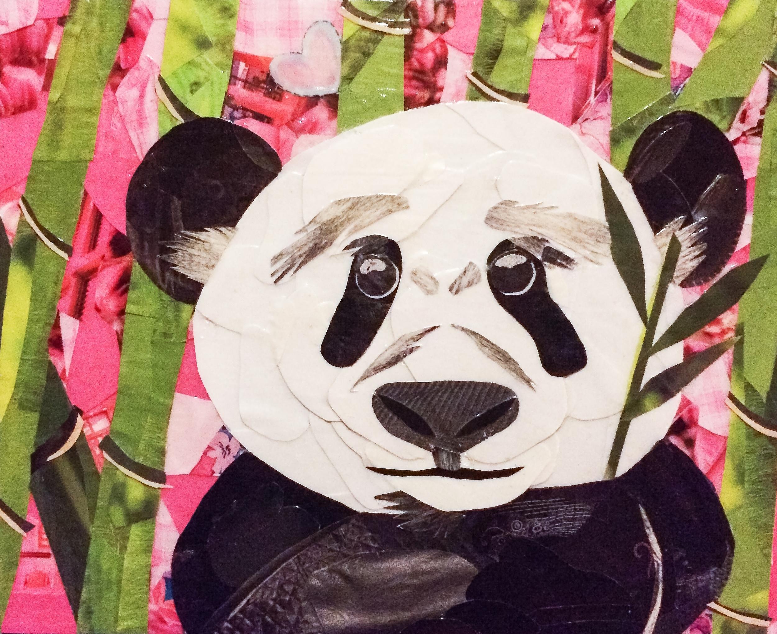 Miranda Panda