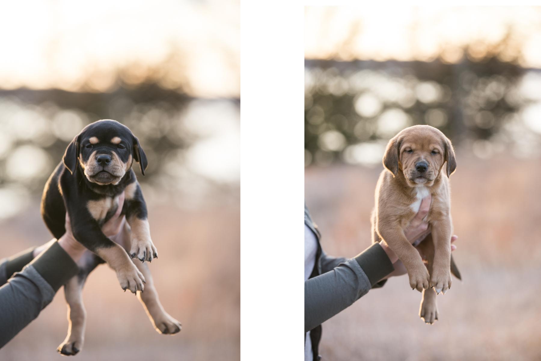 Puppies - 1.jpg