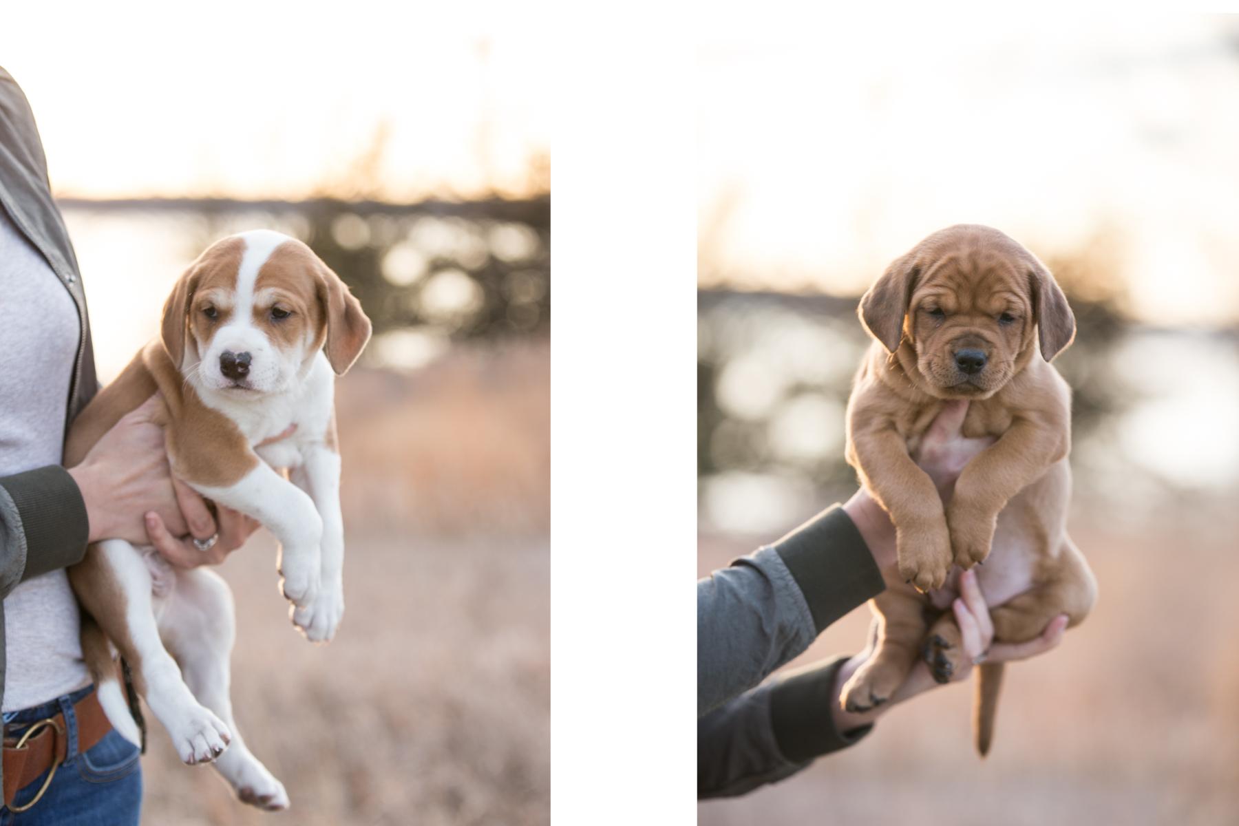 Puppies - 2.jpg