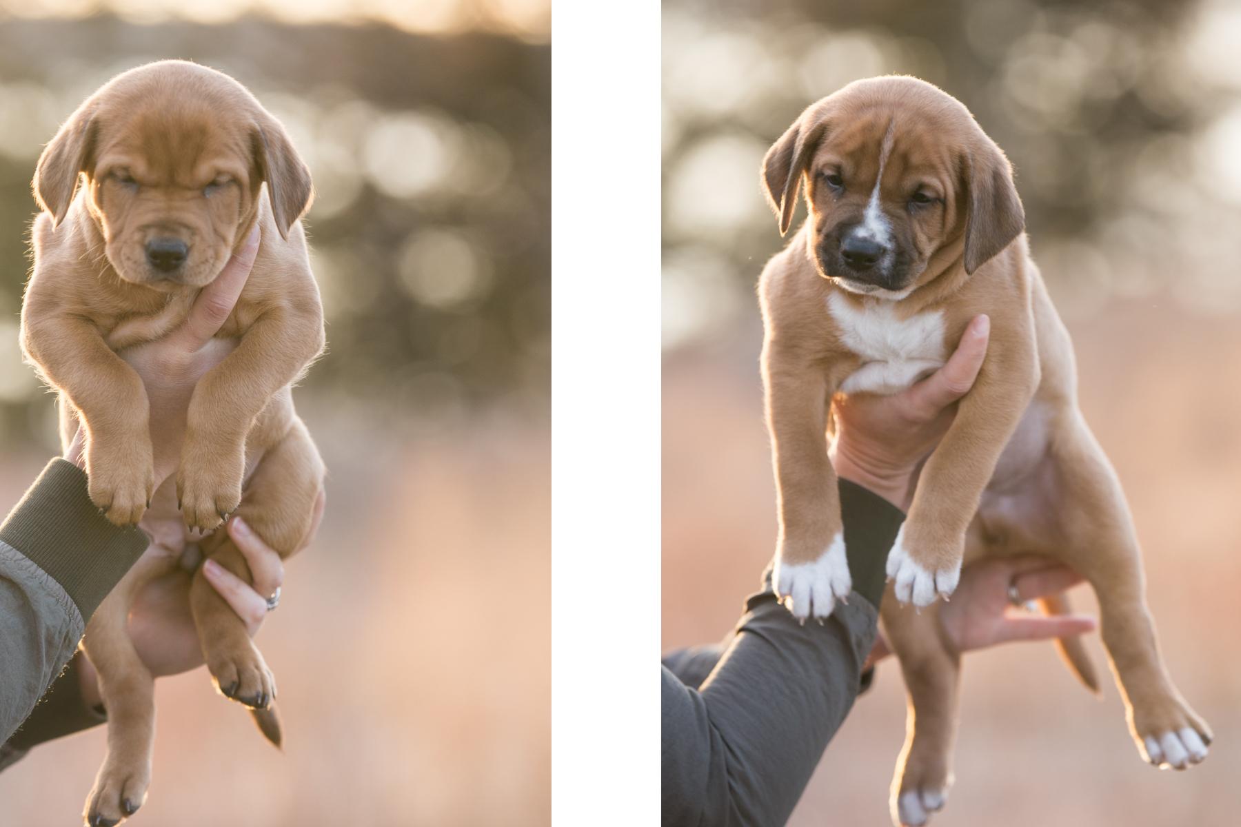 puppies - 4.jpg