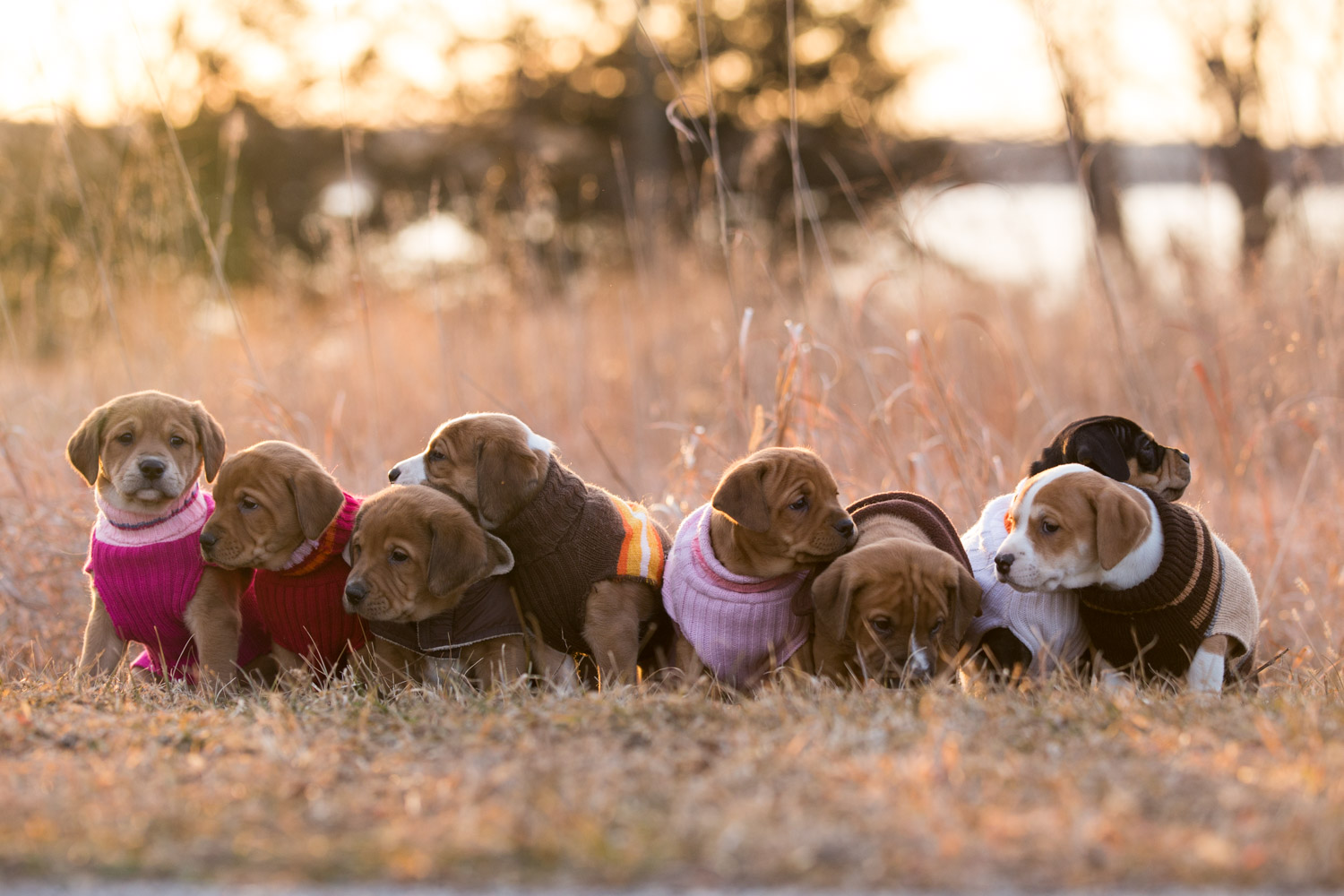 Puppies-blog-9.jpg