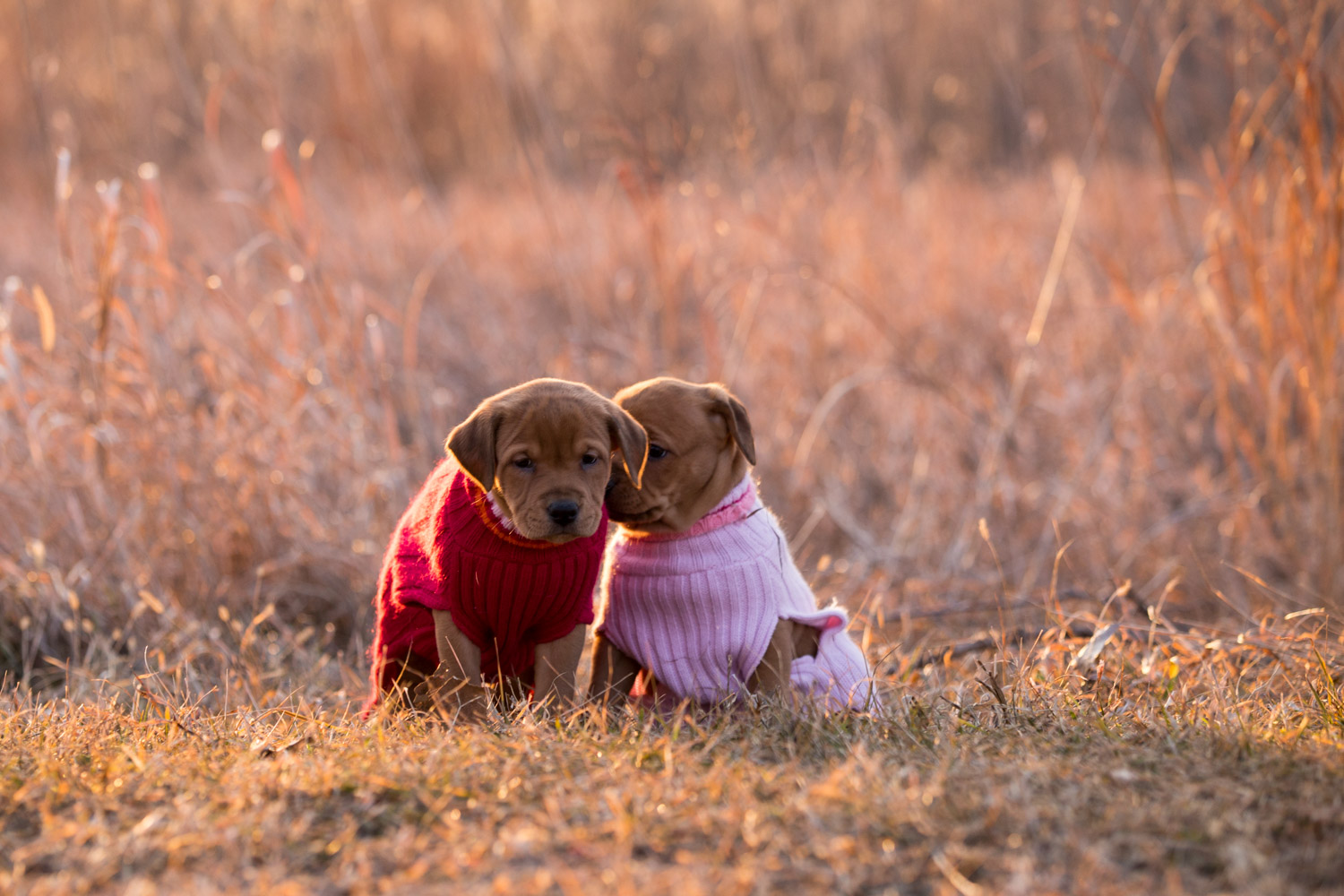 Puppies-blog-12.jpg