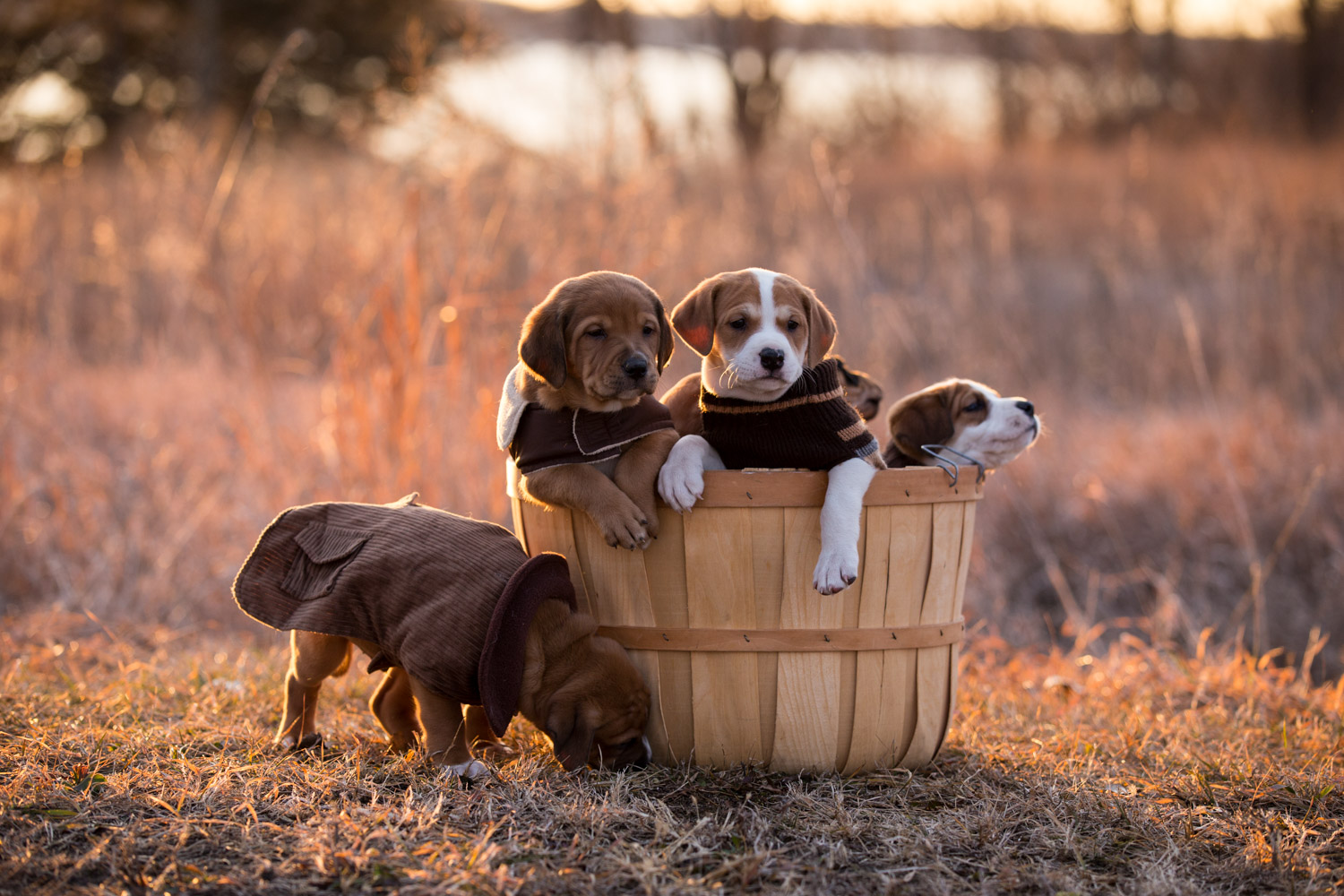 Puppies-blog-13.jpg