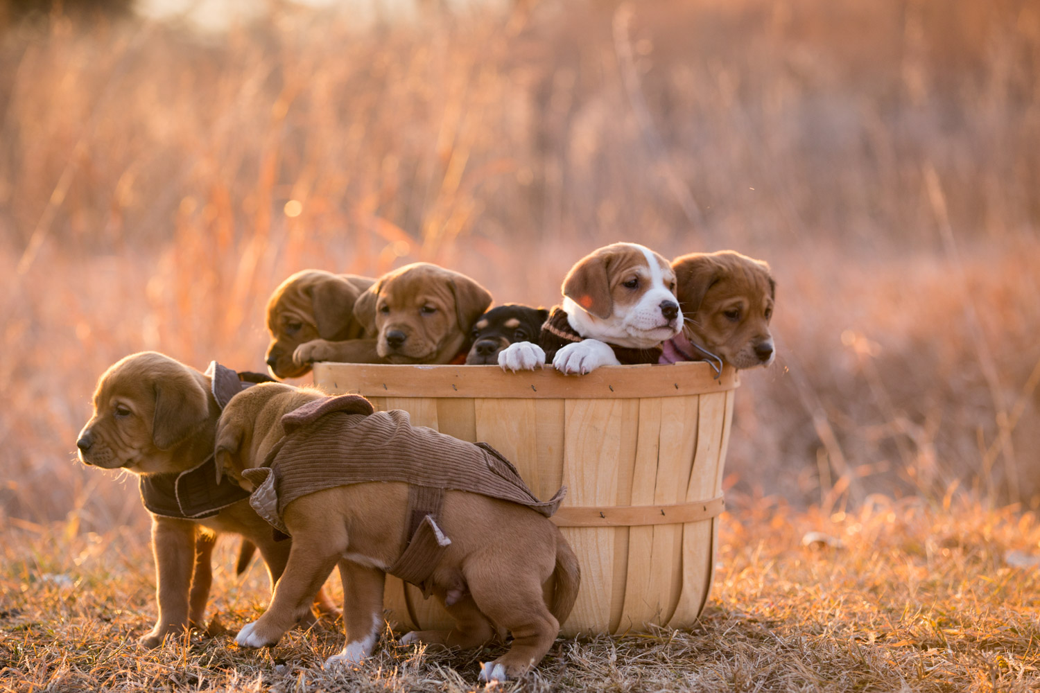 Puppies-blog-14.jpg