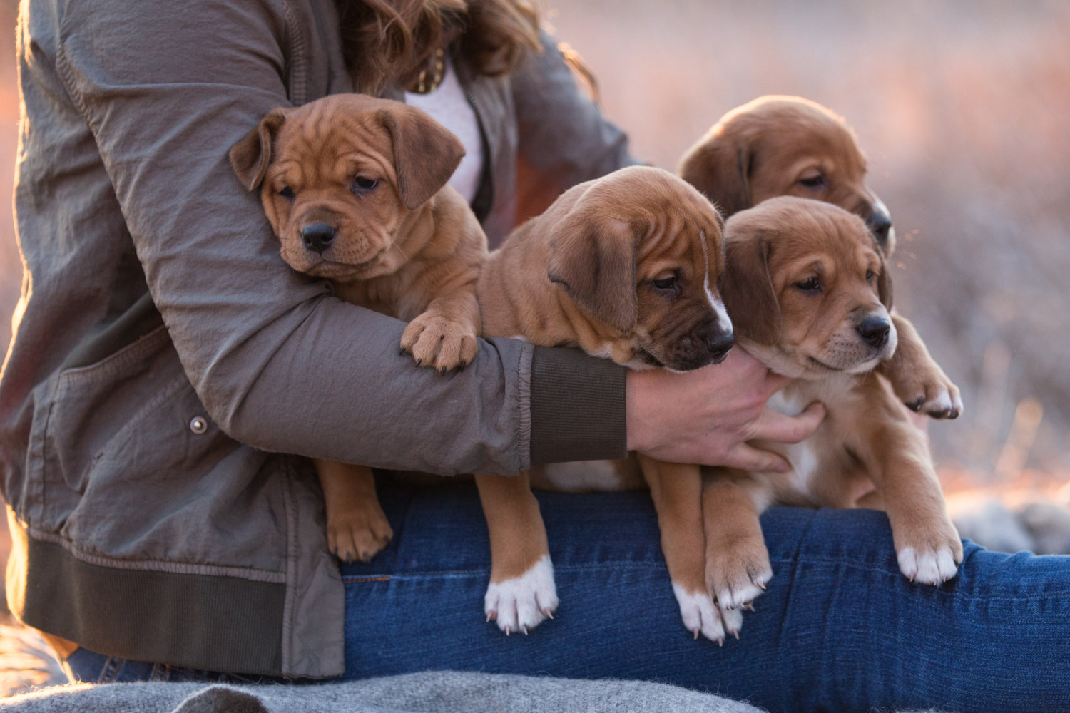 Puppies-blog-17.jpg
