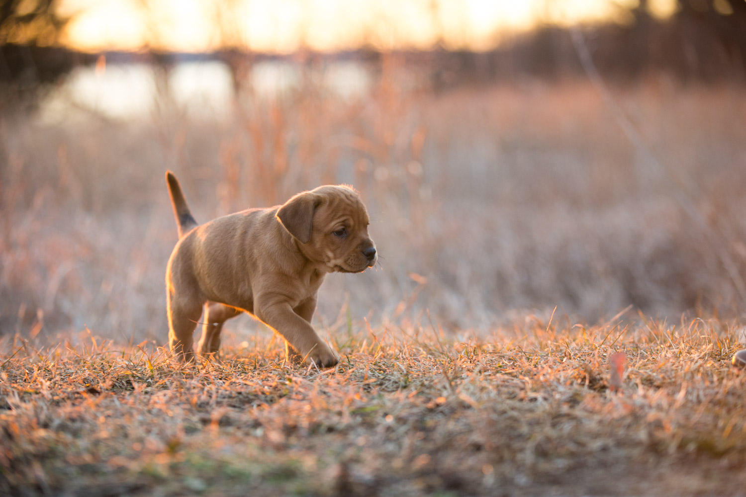 Puppies-blog-22.jpg