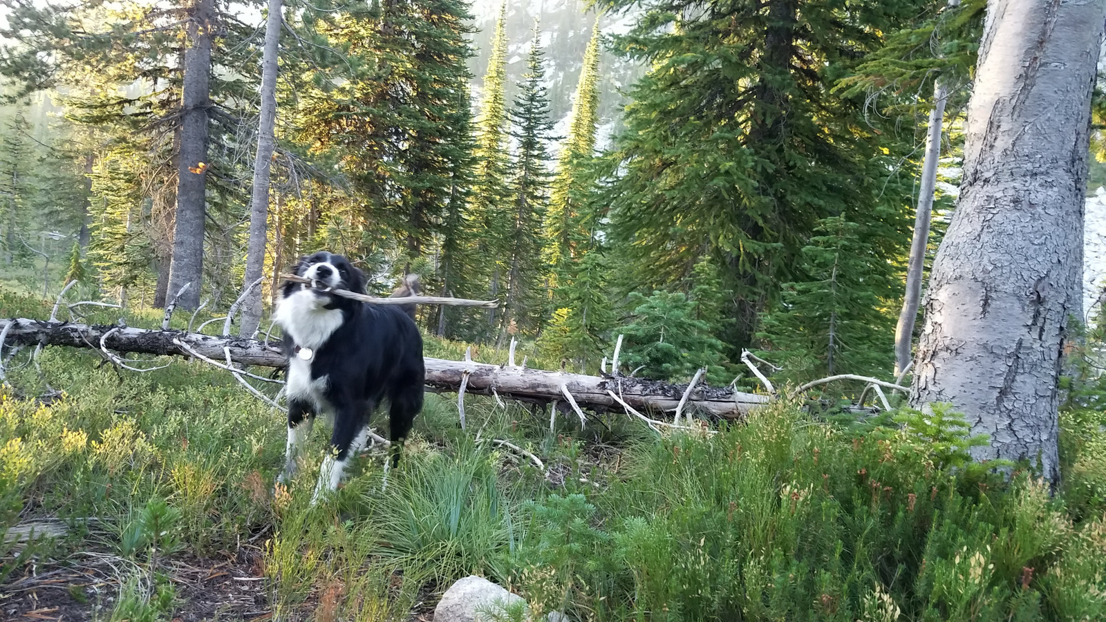 """""""I found the perfect stick, want ta see?"""""""