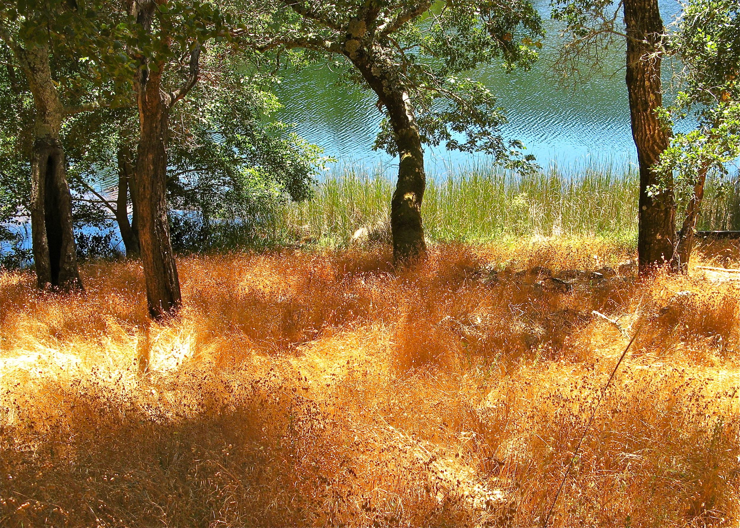 Lake Lagunitas/Summer
