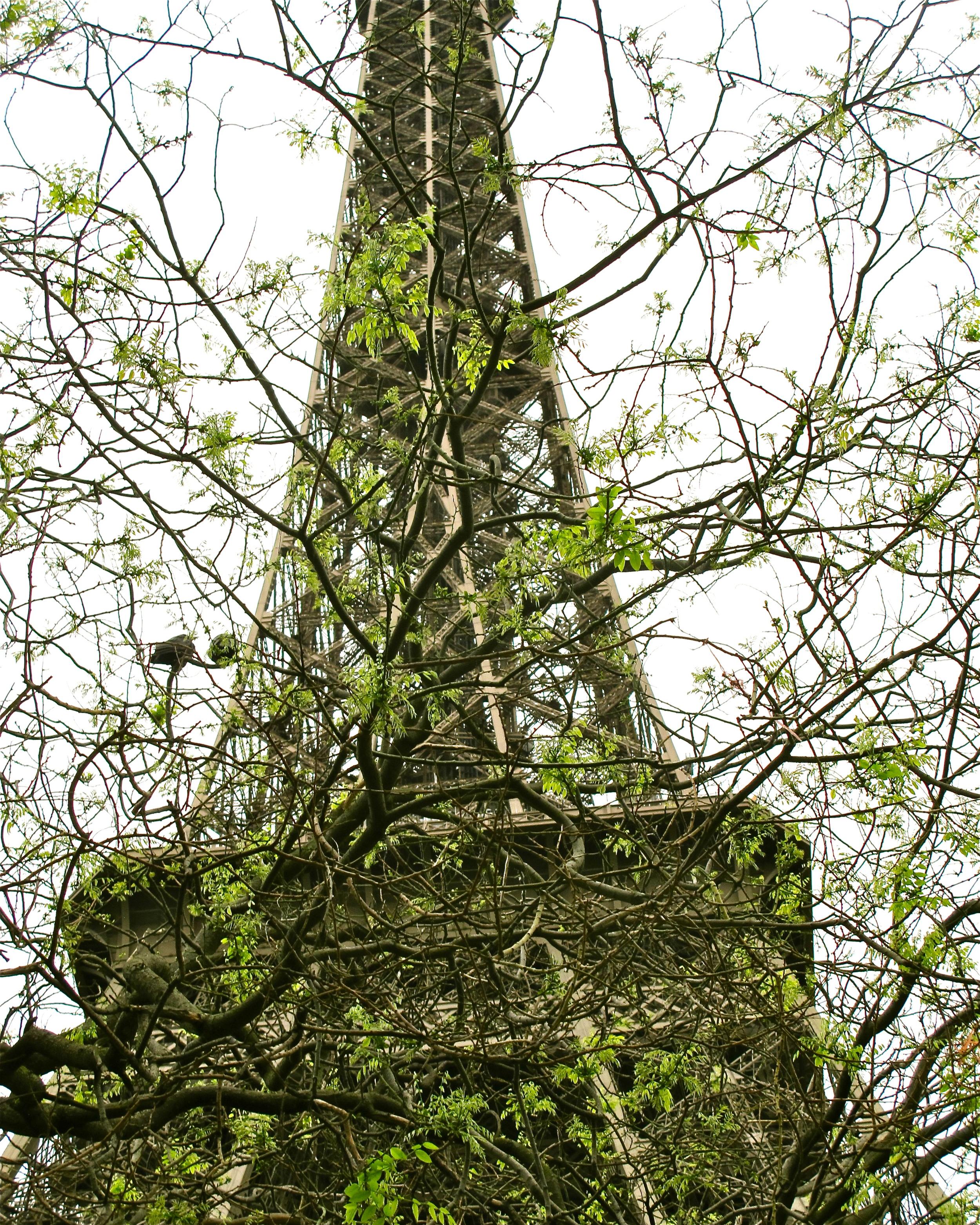 Greening of the Eiffel