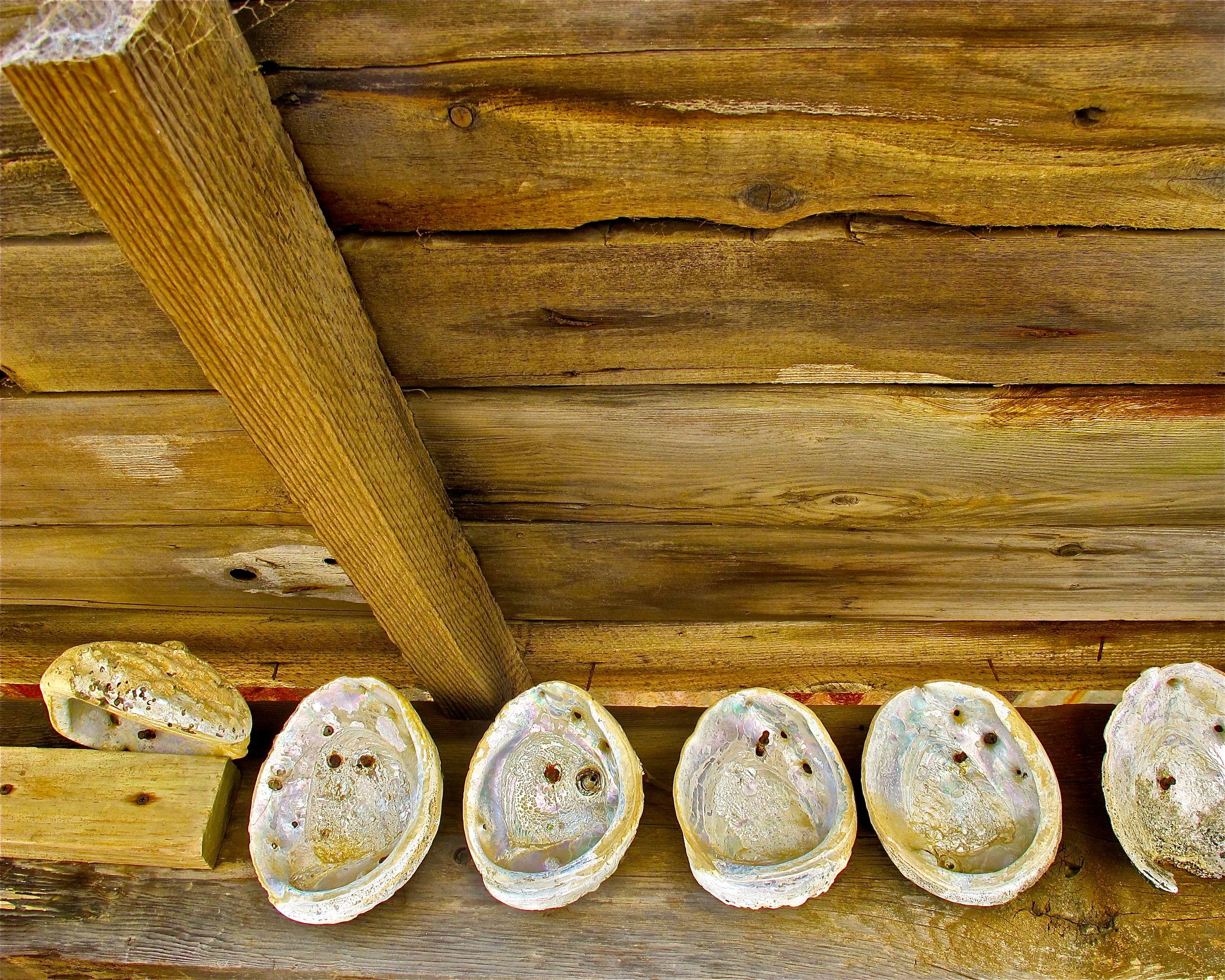 Abalone Shells, China Camp