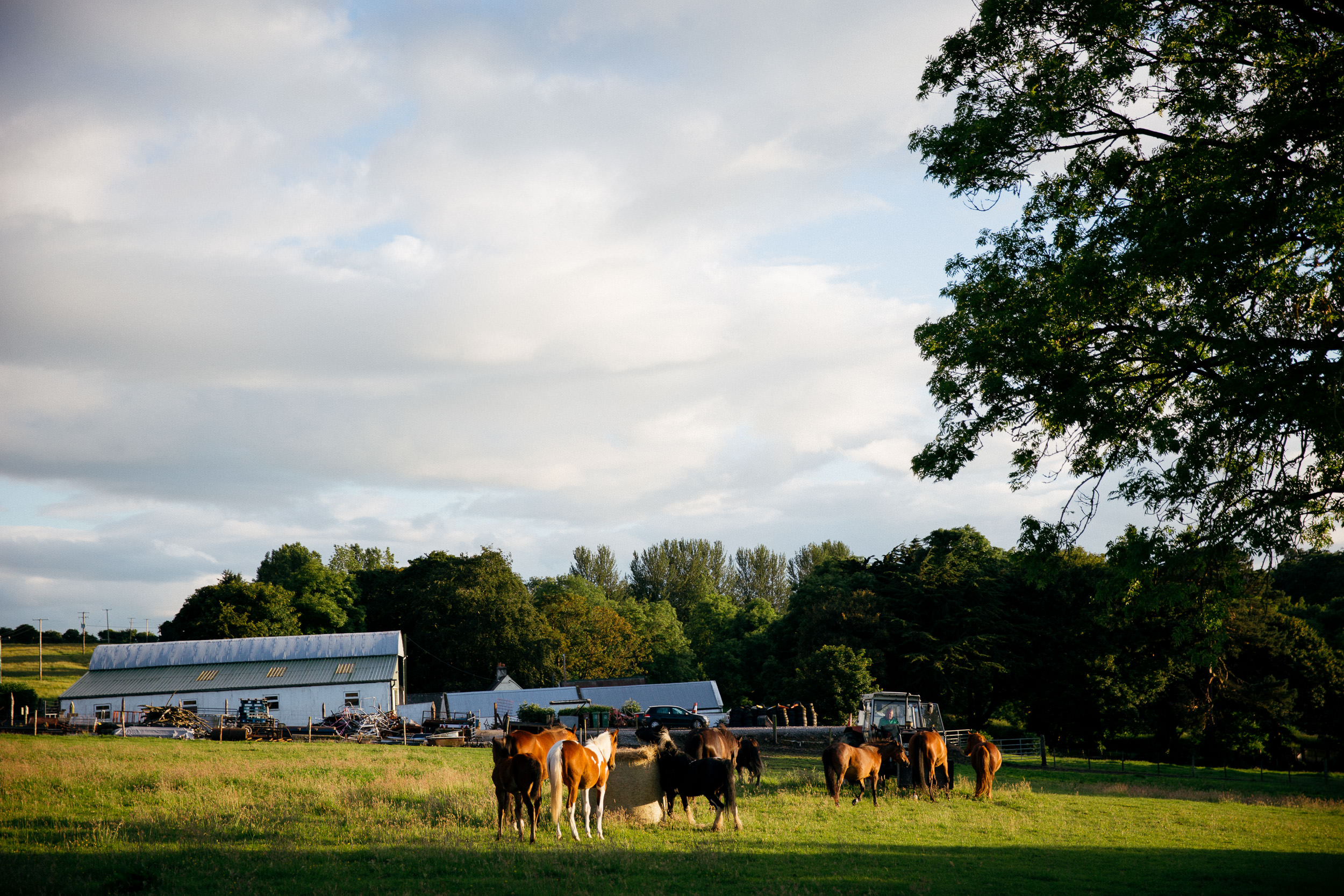 clairebyrnephotography-wedding-photography-ireland-engagement-sunset-farm-horses-38.jpg