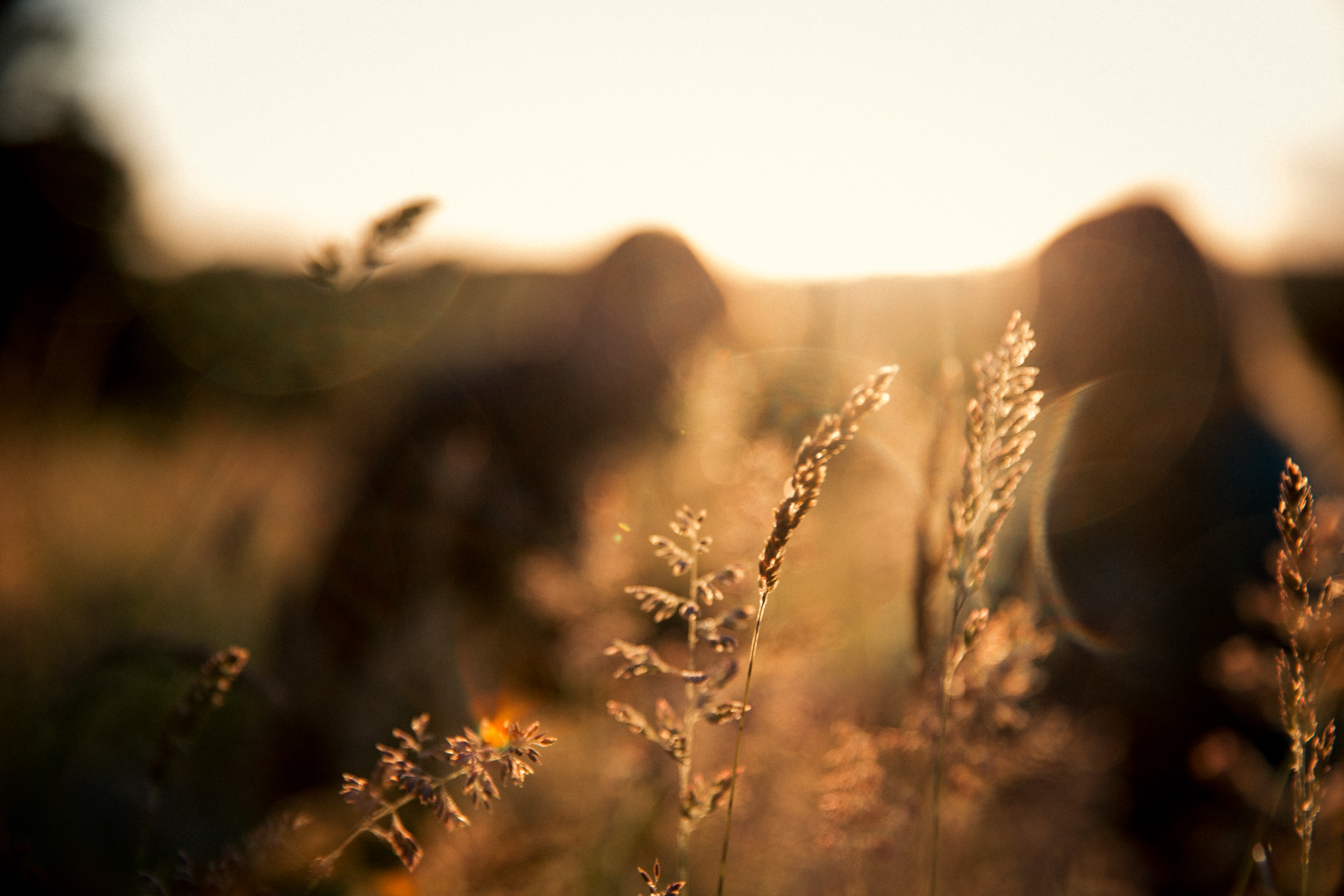 clairebyrnephotography-wedding-photography-ireland-engagement-sunset-farm-horses-56.jpg