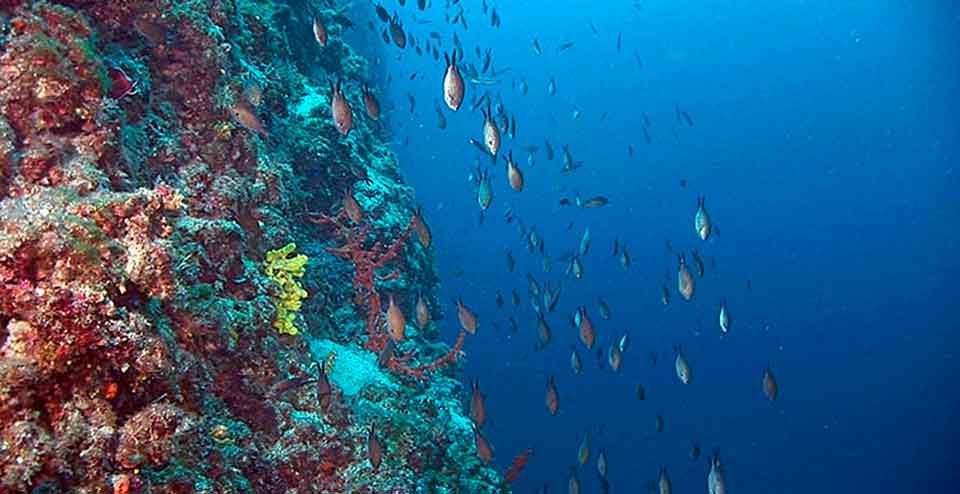 Potapljanje na otoku Susak