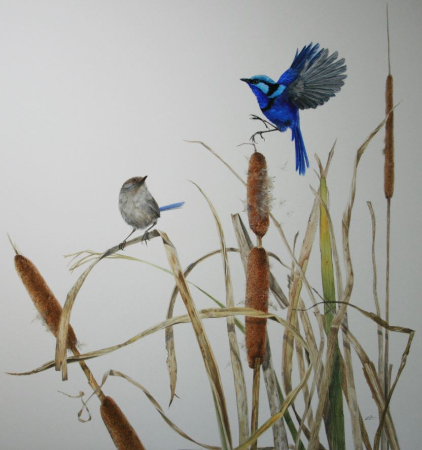 WRENS IN THE RUSHES