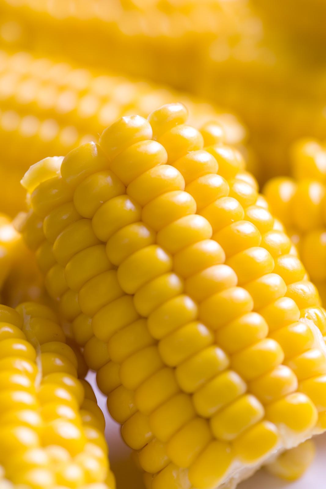 Moderne, søt og saftig. Dagens mais har falt langt fra stammen. Foto:  frukt.no