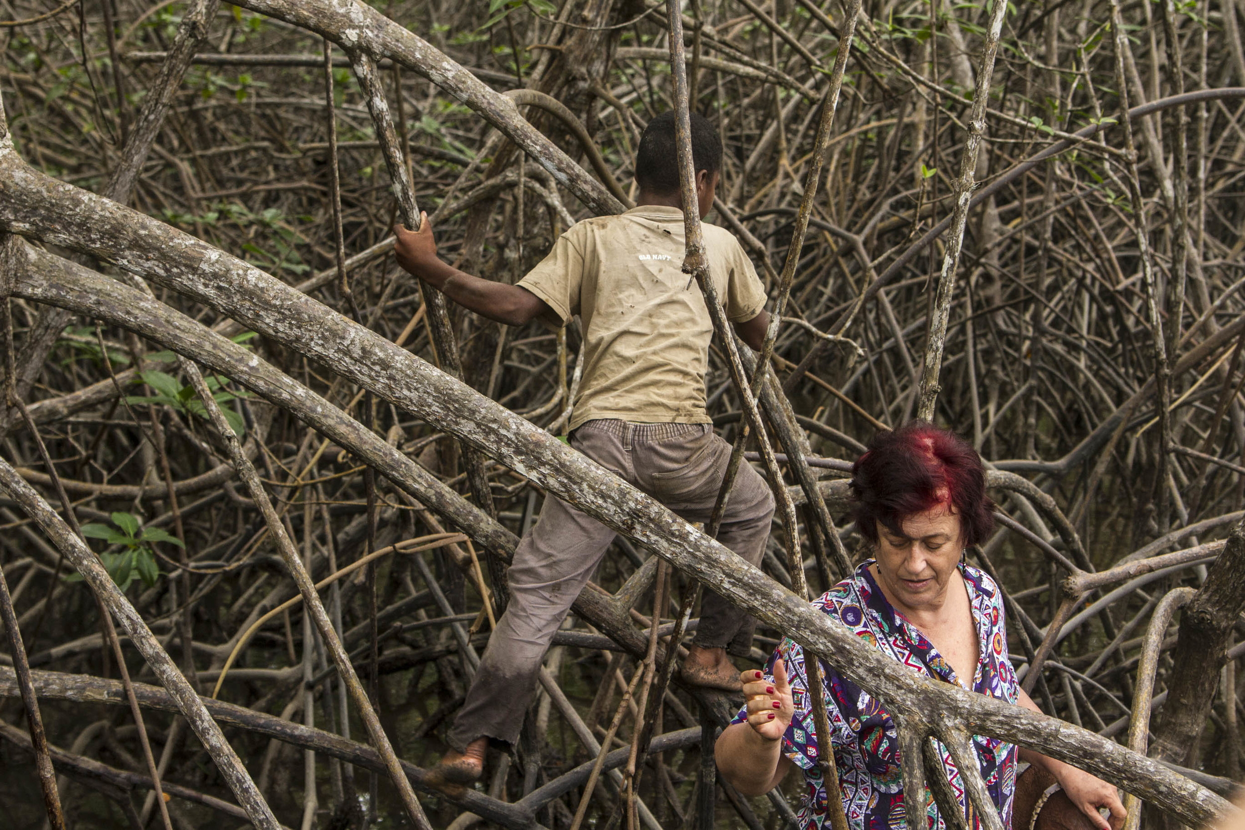 """Picking up """"Piangua"""" in a jungle of mangroove"""