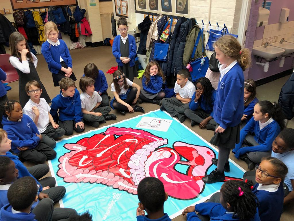 Class 15 - Our digestive system.