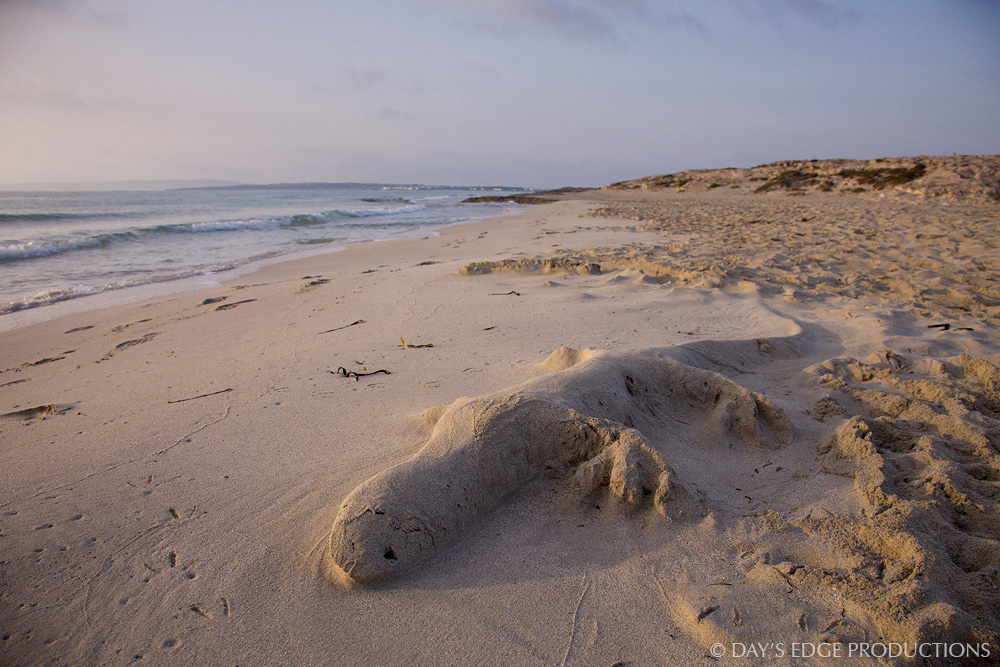 A sand sculpture on the Trucadors Peninsula of Formentera (Balearic Islands, Spain) suggests the Ibiza wall lizard, the symbol of these islands.