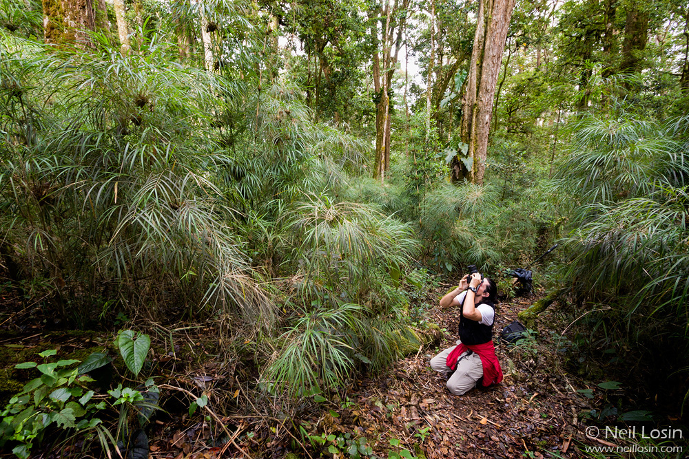 A photographer in the high-altitude oak and bamboo forests of Costa Rica.