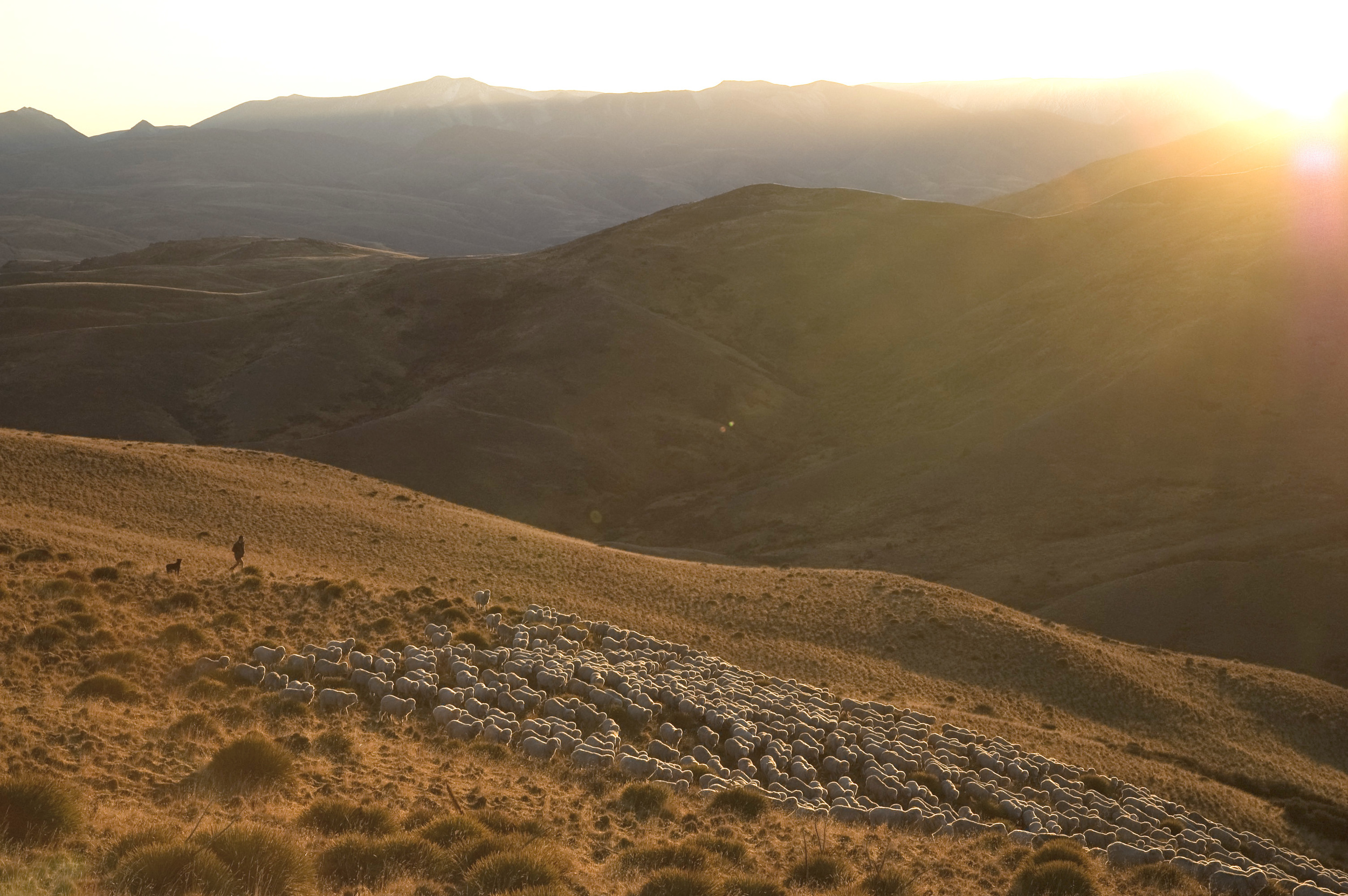 Sunset at a ZQ Merino Ranch in New Zealand  (Courtesy of the New Zealand Merino Company)
