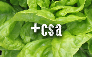 csa-square.png