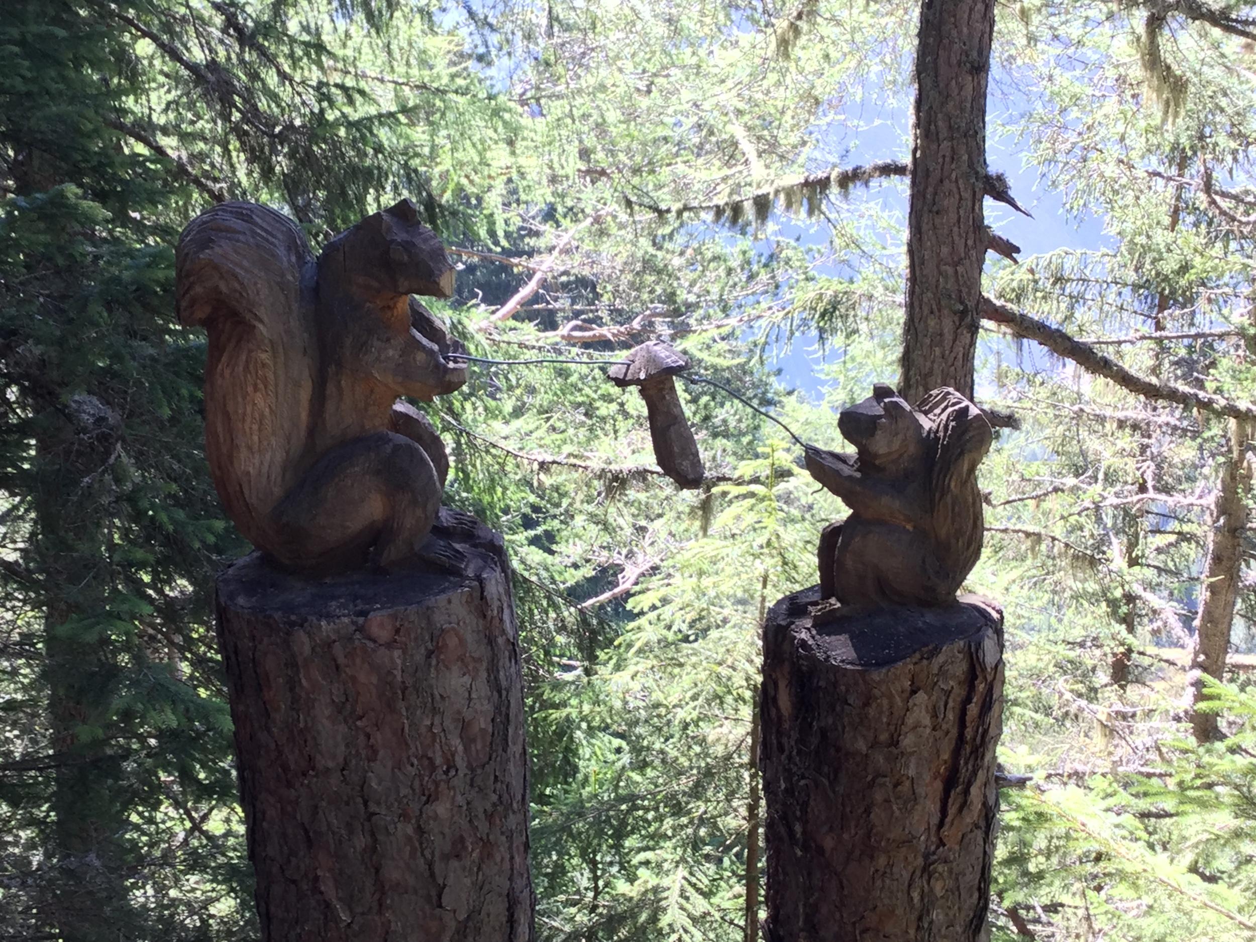 Two squirrels along the Sentier des Champignons.