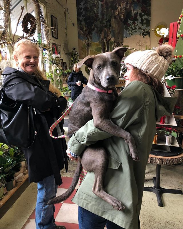 @pepperplacemarket is on this morning!  The sun is shining and the pups are here!  It's a great day to stop by and then come see us @charliethigpens to get some #holidayshopping in at a local #shopsmallbham business.  We're here til 4:00 today! P.S.  Sable is a sweet-tempered dog who is looking for her forever home!  Let us know if you are interested!!!