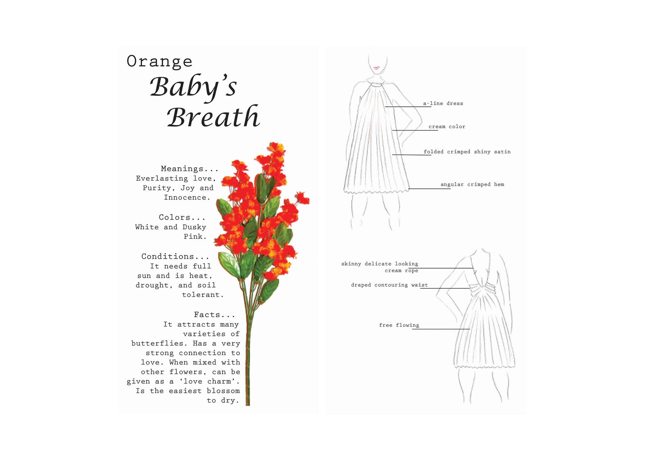 Composition_Botany4.jpg