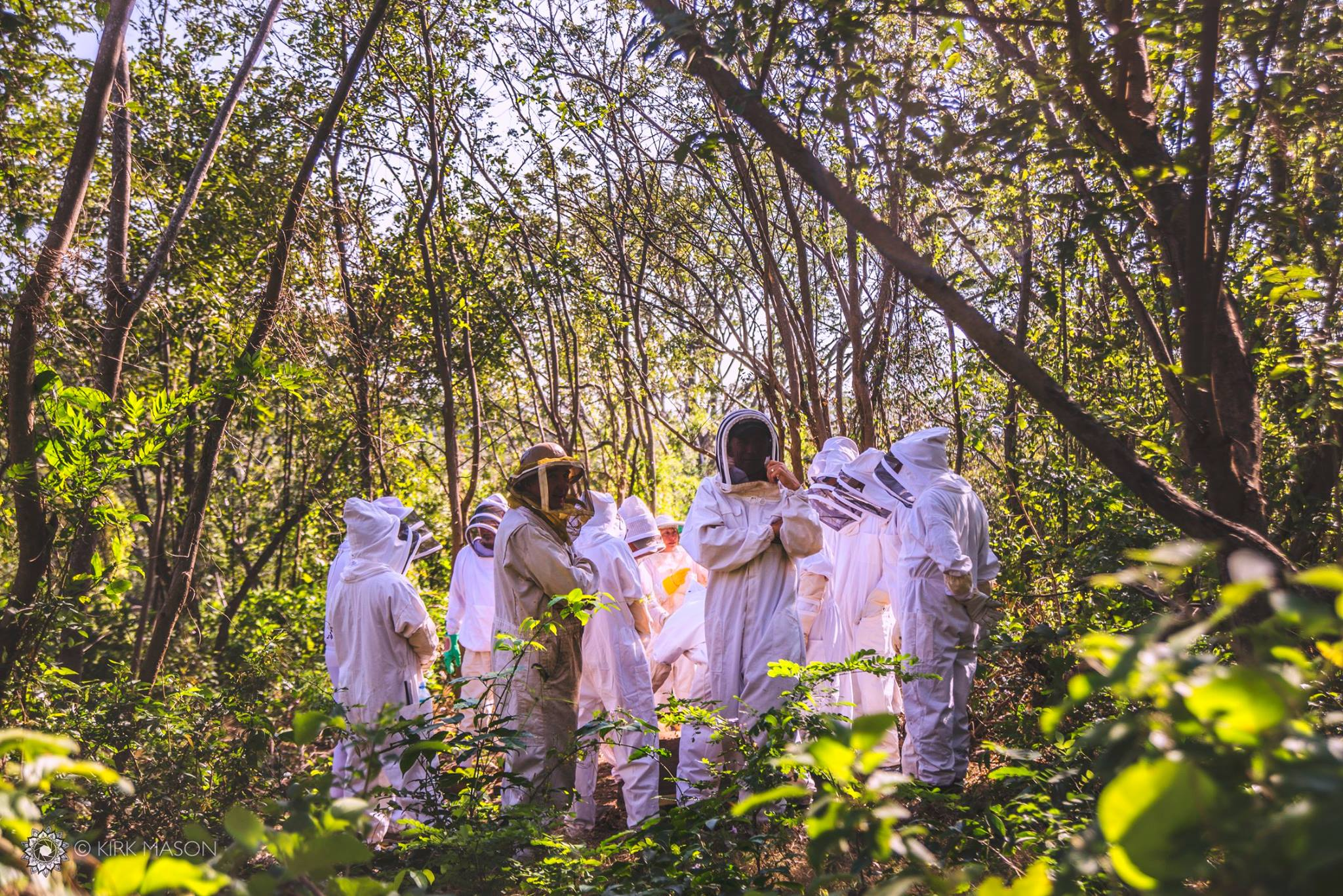 A group of American/Canadian beekeepers exploring an Africanized Honeybee colony on a coffee plantation near Chocoyero Nature Reserve in Masaya, Nicaragua. I was a photographer for Nicabeja Proyecto (Nicaragua Bee Project), a farmer-to-farmer style program in which American and Canadian beekeepers spend two weeks traveling to a dozen farms/co-ops/beekeeping operations to learn about keeping Africanized Honeybees (killer bees), while also imparting best management practices from research institutions in the US. Young Nicaraguan beekeepers participate in the trip as well, obtaining mentorship from experienced beekeepers and making plenty of new friends in the process :)