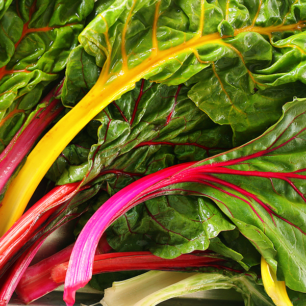 Swiss Chard - This is in the same species as the garden beet which are primarilay grown for their edible roots. Swiss Chard is a leafy vegetable that is grown for its edible leaves. The ribs not only come in white but also red and yellow.Young chard can be eaten raw in salads but it gets bitter the older the plant is. Mature chard leaves and stalks taste best cooked or sauted, their bitterness fades when cooking, leaving a refined flavor which is more delicate than that of cooked spinach.