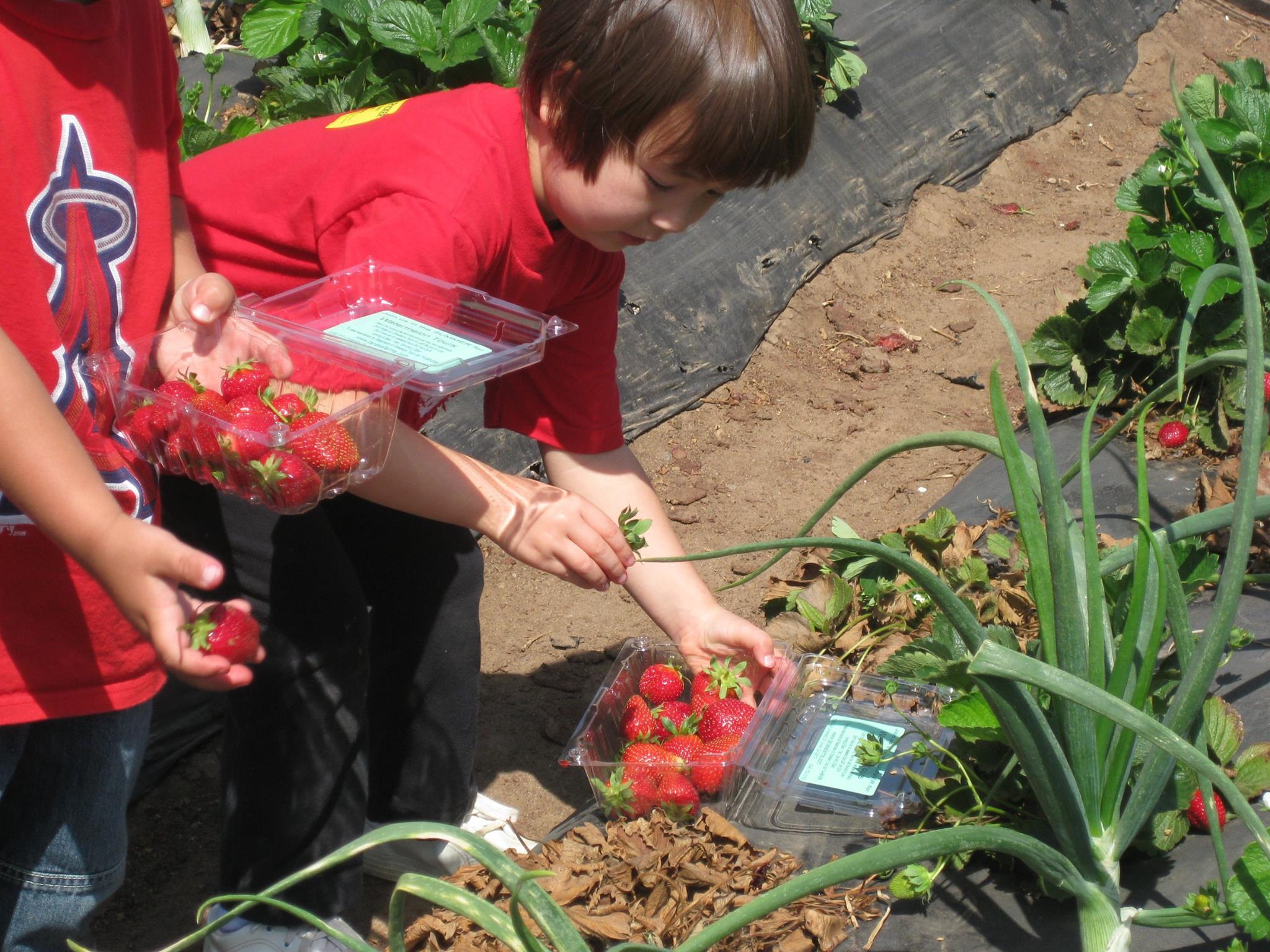 Little girls picking berries.jpg