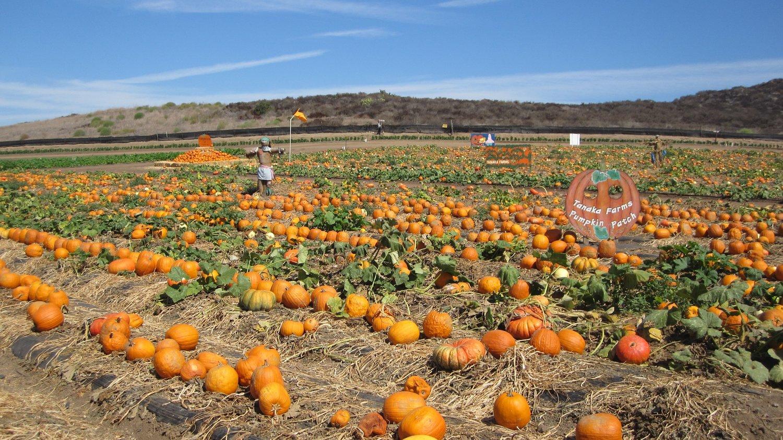 del amo mall pumpkin patch 2020