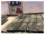 Lil Farmer Sprouting 2 April 23.png